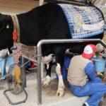 こどもの国牧場で恒例の「牧場まつり」を開催/雪印メグミルク